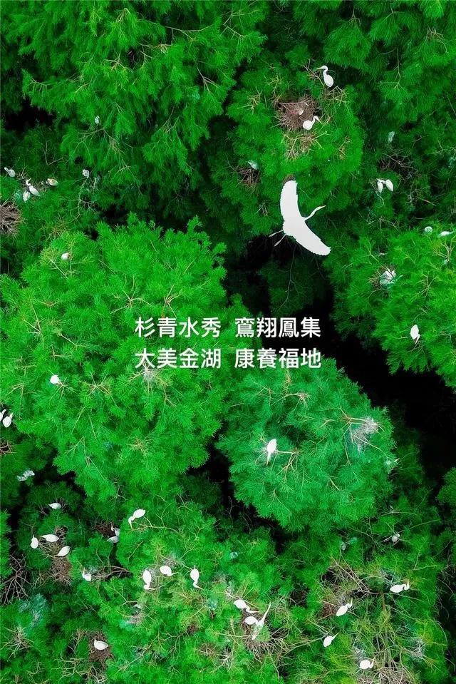 箱根集团.jpg